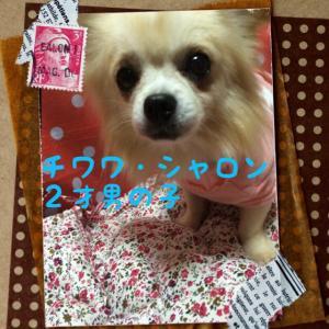 fc2blog_20151004101103cf8.jpg