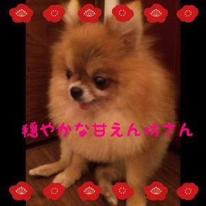 fc2blog_2015101523235362a.jpg