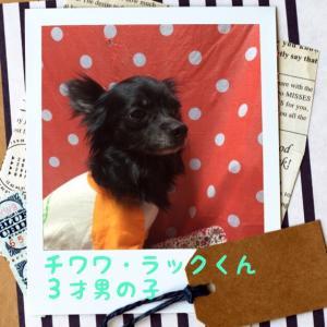 fc2blog_20151031181014cd8.jpg