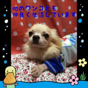 fc2blog_20151031181016dac.jpg