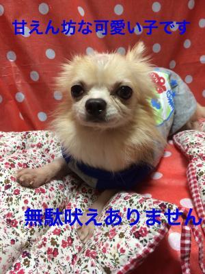 fc2blog_20151031181020096.jpg