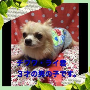 fc2blog_20151031181027e45.jpg