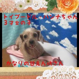 fc2blog_20151111193331f3b.jpg