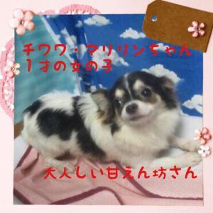 fc2blog_2015111119333492e.jpg