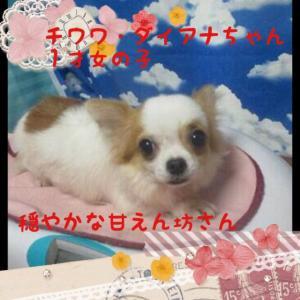 fc2blog_2015111119333518b.jpg
