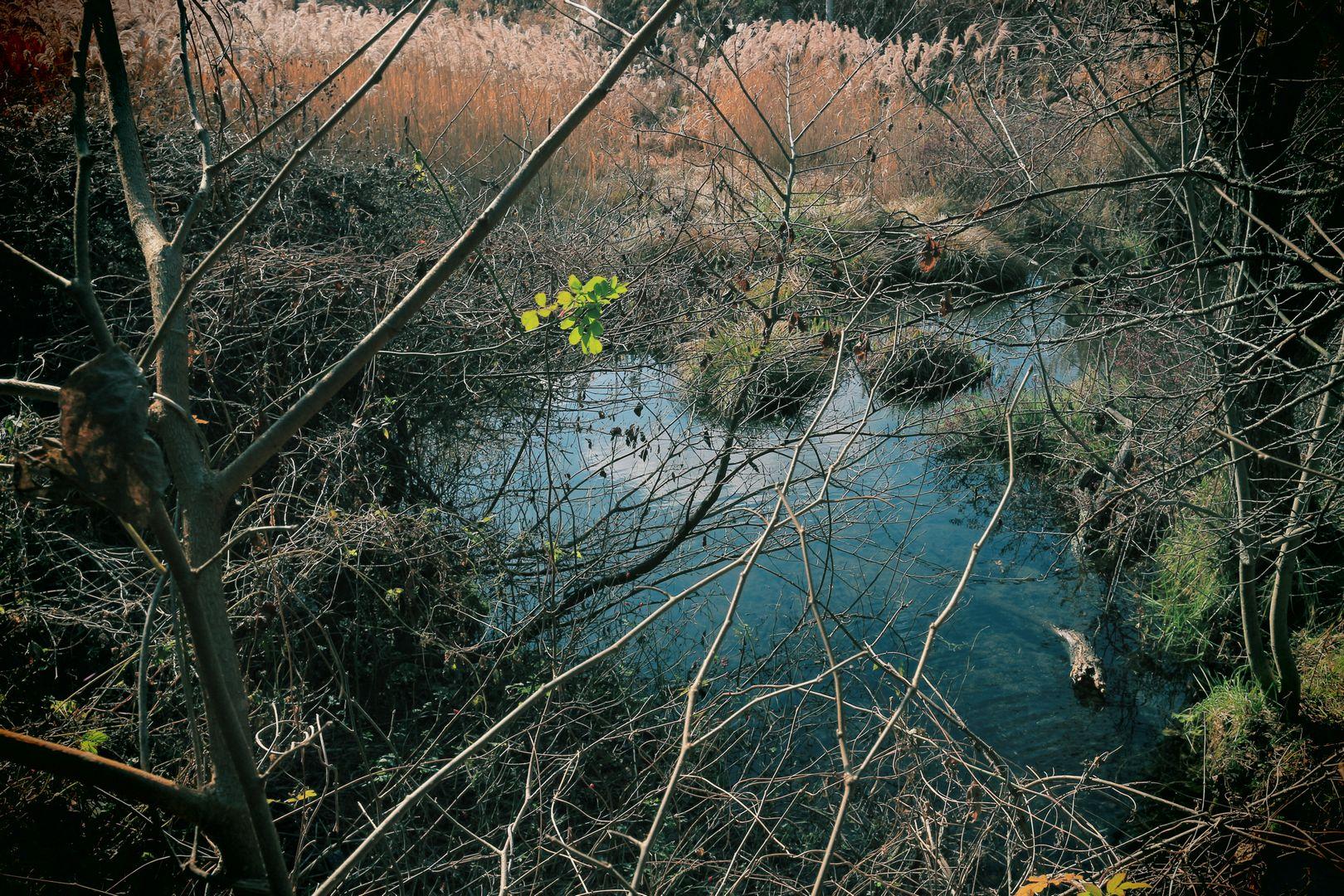 長坂の沼001