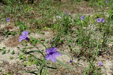 紫野花裏庭 P1070384