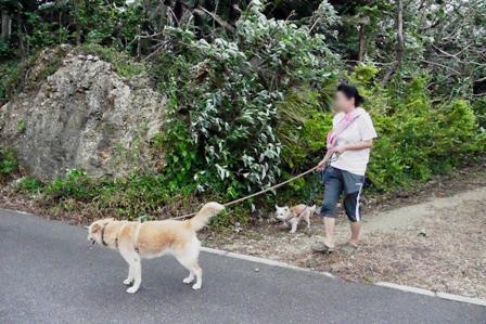 台風散歩9月28日朝 P1070580