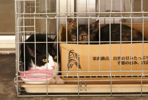 P1070881 - 2猫