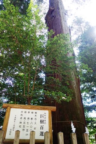 DSC00693 - 高千穂神社