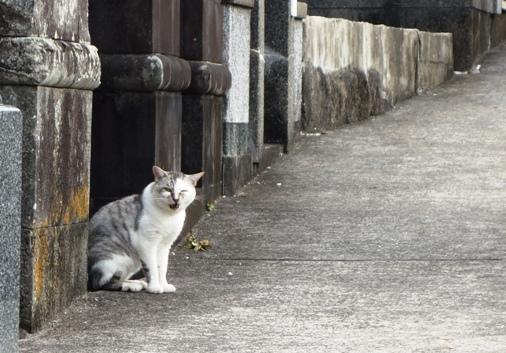 DSC00013 - 長崎猫