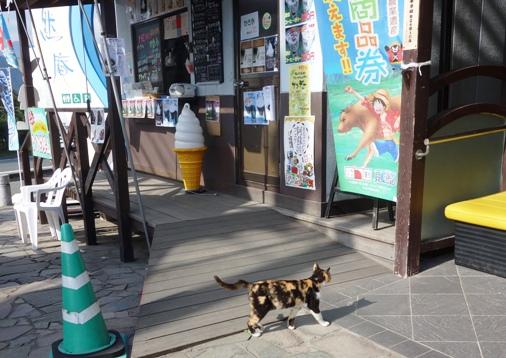 DSC00598 - 白川猫