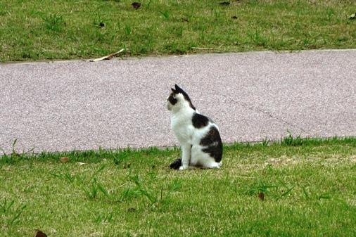 DSC09785 - 高島猫