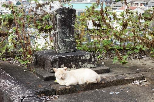 DSC00039 - 長崎猫