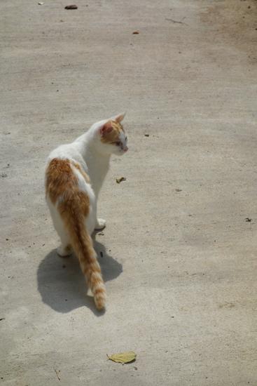 DSC04725 - 街猫