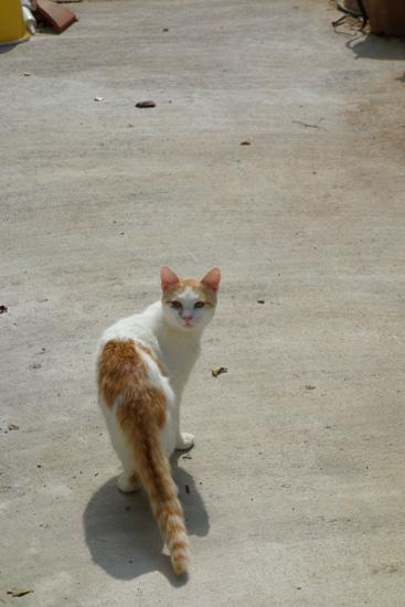 DSC04727 - 街猫