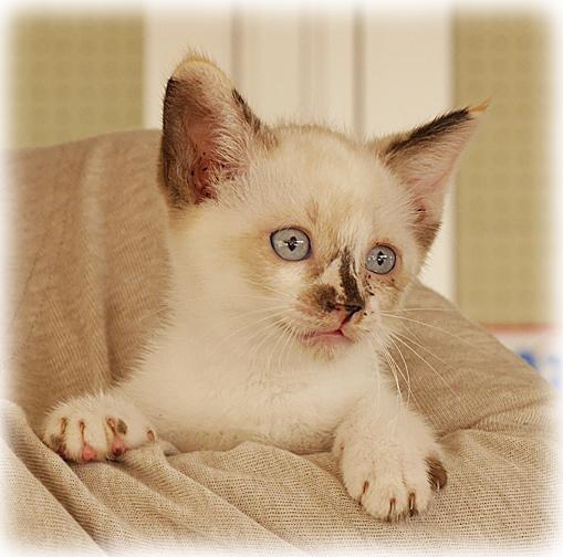 P1100083 - 子猫 - コピーのコピー