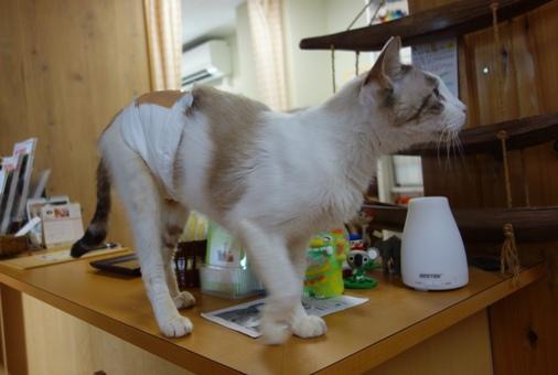 DSC01467 - 看板猫
