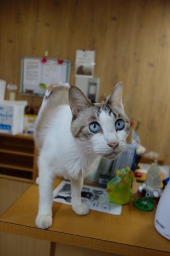 DSC01469 - 看板猫