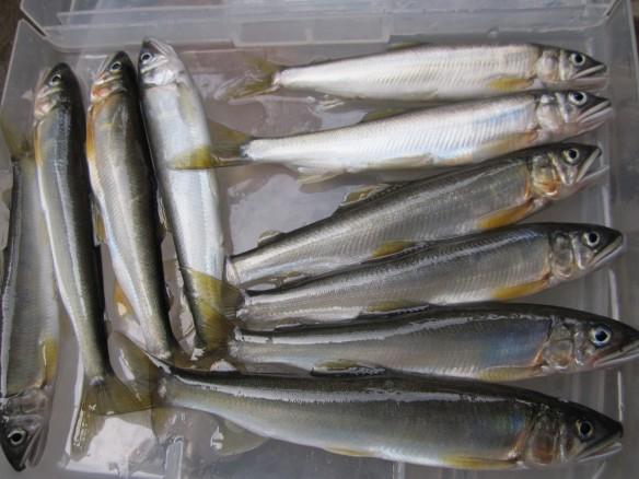 27.10.5鮎の餌釣りへ 021_ks