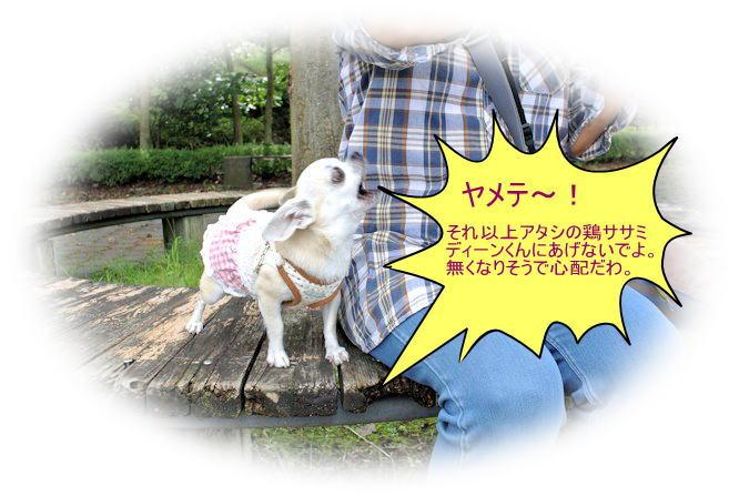 2015長岡公園0682
