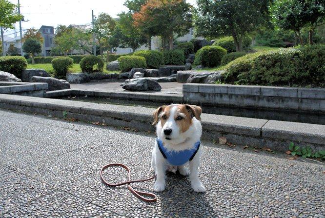 2015散歩128