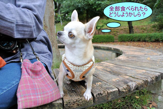 2015長岡公園0723
