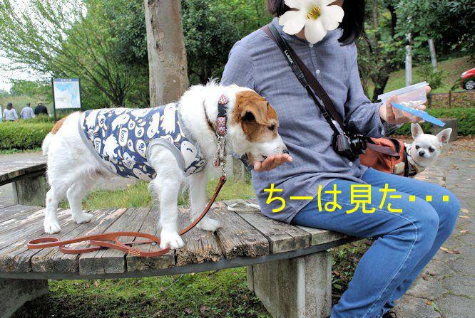 2015長岡公園0736
