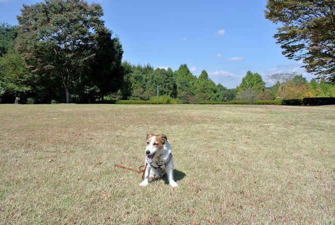 2015長岡公園0779