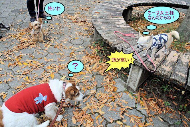 2015長岡公園0801