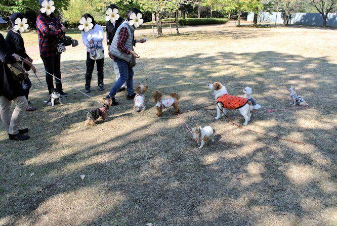 2015長岡公園0816