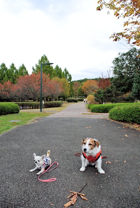 2015長岡公園0825