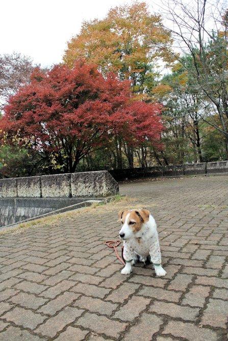2015長岡公園0854
