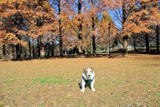 2015長岡公園0897