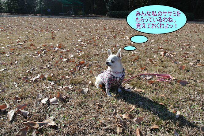 2015長岡公園0939