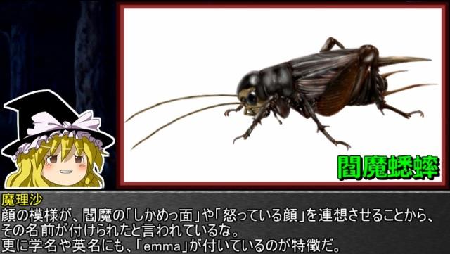 ゆっくり霊夢とやる夫が学ぶ 昆虫大百科 part24