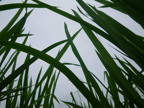 まる米の楽ちん人生