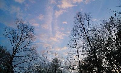 冬枯れの空