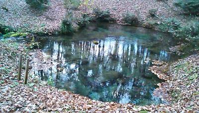 落ち葉に覆われた源泉