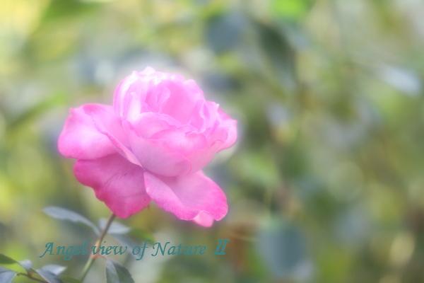 ブルーリバー(201510209531京成①
