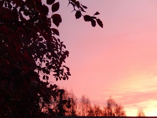 朝焼けと紅葉