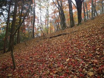 落ち葉のプロムナード