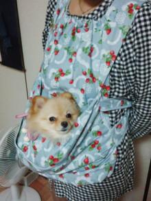 ちび助ママのブログ