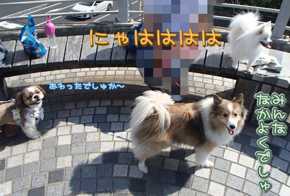 16_20150915204550361.jpg
