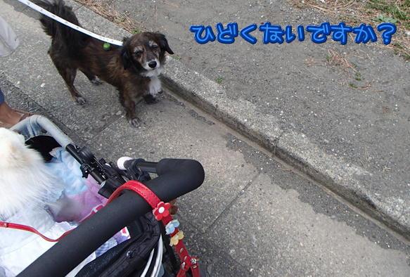 3_20151029201939ac1.jpg