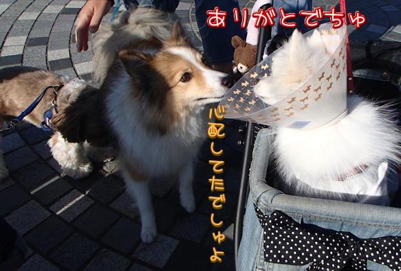 7_20151019191253039.jpg