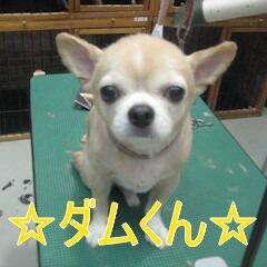IMG_8403_20150831212042e1d.jpg