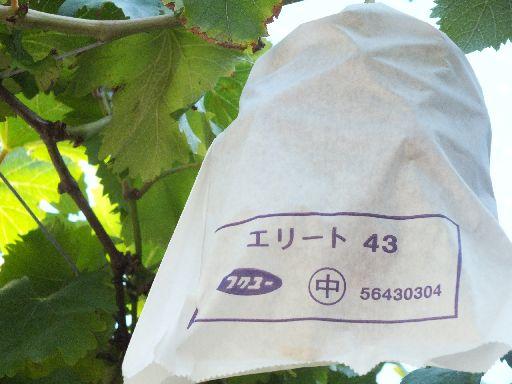 DSCF7733.jpg