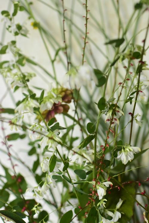 flower_15_9_13_4.jpg