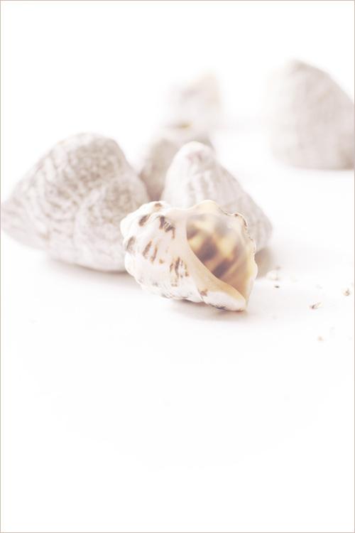 seashell_15_11_27_3.jpg